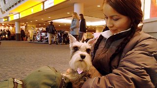 Another Airline Is Cracking Down On Emotional Support Animals - Video
