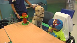facility dog - Video
