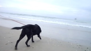 Twelve-Year-Old Dog Experiences The Ocean For The First Time