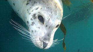 Friendly Harbor Seal Gets Cuddly