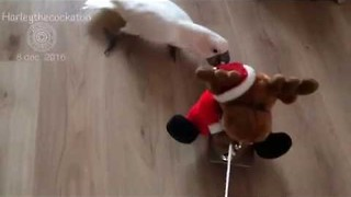 Persistent Bird Follows Santa Toy Around the House - Video