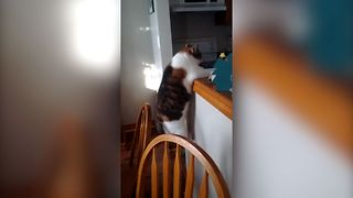 15 Cats Who Regret Taking The Leap - Video
