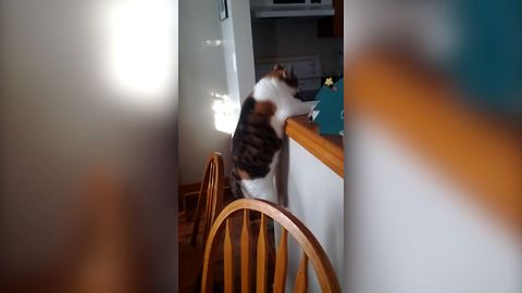15 Cats Who Regret Taking The Leap