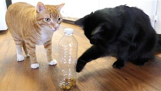5 Life Hacks Fur Cat Owners - Video