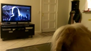 Howling dog sings along with opera singer