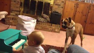 Baby Girl Performs Musical Duet With Boxer Best Friend - Video