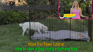 Hope For Paws tutorial: How to save a dog using a humane trap - Video