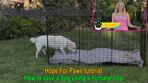 Hope For Paws tutorial: How to save a dog using a humane trap