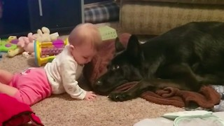 German Shepherd Lovingly Tries To Share Blanket With Baby