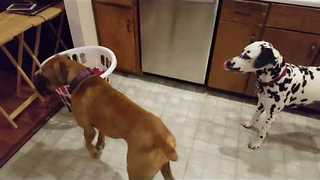 Dogs Too Afraid of Laundry Basket to Get Treat Hidden Inside - Video