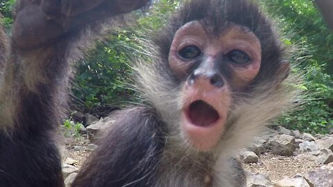 Monkey and her baby curiously investigate hidden camera