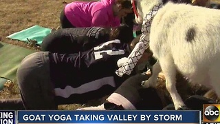 Goat yoga bringing the Valley together one goat at a time - Video