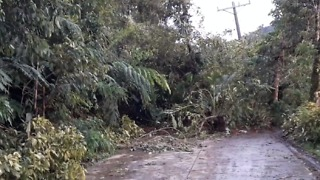Tropical Storm Kai-Tak Downs Trees and Blocks Roads in Philippines - Video