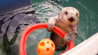 Otters Play Basketball