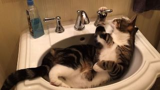 13 Cats With Love Hate Relationships With Water