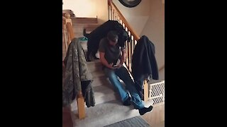 Funny dog displays perseverance at its finest