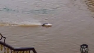 Resident Races Remote-Controlled Speedboat as Floods Hit Trinidad - Video