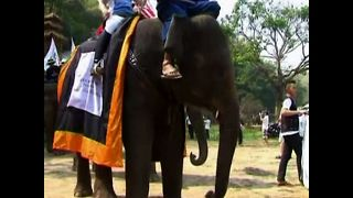 Elephant Polo Tournament - Video