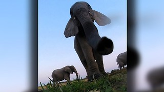 Caught On Camera: Elephant Stomps GoPro - Video