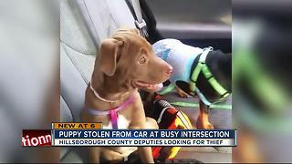 Woman says driver stole her puppy from her car while she waited at a stop light - Video
