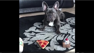 Dog chooses cake over pizza for breakfast - Video