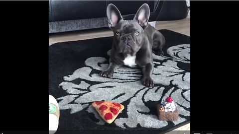 Dog chooses cake over pizza for breakfast