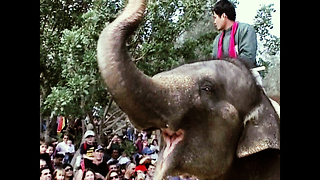 Elephant Weekenders - Video