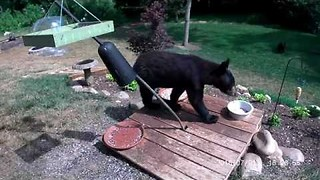 Black Bears Caught on Camera Targeting Bird Feeder - Video