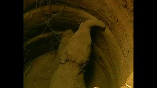 Baby Elephant Rescued From Well