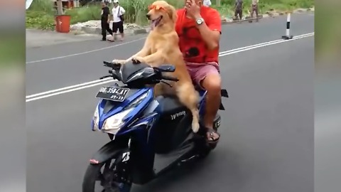 Funny Animal Video - Dog Riding Scooter
