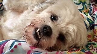 How my dog smiles for the camera - Video