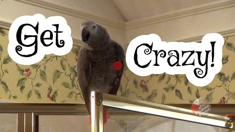 Einstein the Parrot likes to get crazy!