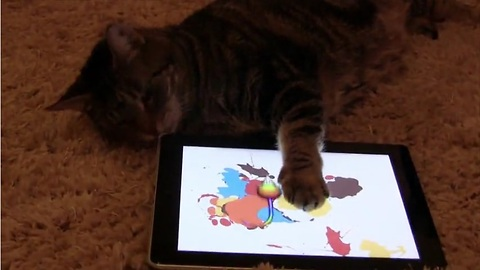 How to entertain cats: Virtual mice!