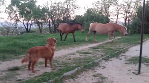 A Dog Is Introduced To A Pair Of Horses. Wait Until You See What Happens Next.