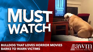 Bulldog that LOVES horror movies barks to warn victims - Video