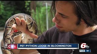 Bloomington man searching for escaped pet python - Video