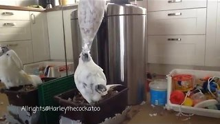 Clever Cockatoo Swings Bottle Around to Get Paper Inside - Video