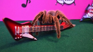 Insta Spider: 'Cute' Tarantula Dresses Up For Tumblr - Video