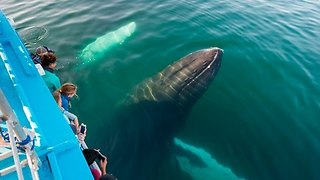 Anniversary Surprise Leads to Up-Close Encounter With Humpback Whales - Video