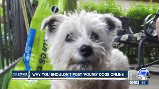 Family says lost dog claimed by a stranger - Video