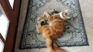 Jack the Cat wrestles with Squirrel Stuffie - Video
