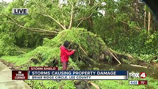 Strong winds destroy pool cage, rip giant trees from ground