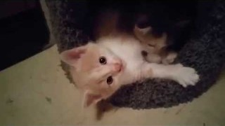 Cute Kittens Having the Time of Their Little Lives - Video