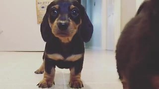Excited puppies closely examine camera - Video