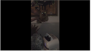 Yorkie air-swims when held over AC unit - Video