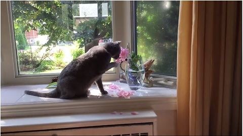 Cat destroys flowers to drink from vase