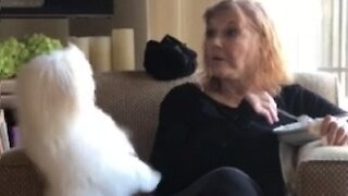 Dog has a hilarious technique when it comes to asking for food