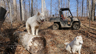 The Shenandoah - Huskies Running Free! - Video