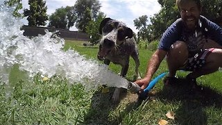 Dog Goes Crazy When Attacking Firehose Water - Video