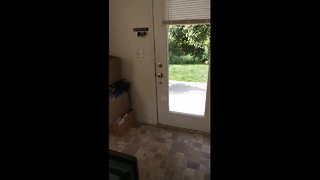 Dog behaves strangely when left outside - Video